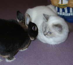 Auch mit anderen Haustieren wird oft Freundschaft geschlossen.